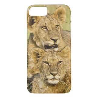 Grupo de cachorros de león, Panthera leo, Masai Funda iPhone 7