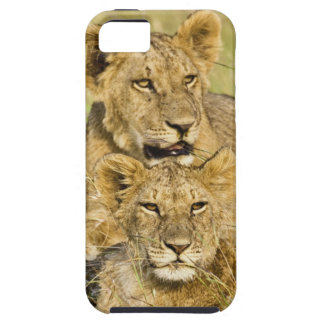 Grupo de cachorros de león, Panthera leo, Masai Funda Para iPhone SE/5/5s