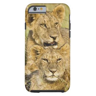 Grupo de cachorros de león, Panthera leo, Masai Funda Resistente iPhone 6