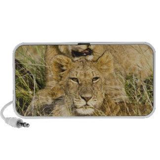 Grupo de cachorros de león, Panthera leo, Masai Ma Altavoces De Viaje