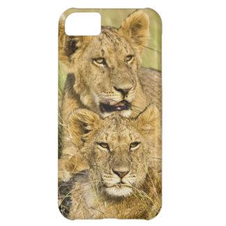 Grupo de cachorros de león, Panthera leo, Masai Ma Carcasa Para iPhone 5C
