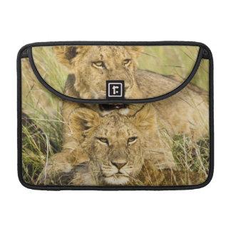 Grupo de cachorros de león, Panthera leo, Masai Ma Funda Para Macbooks