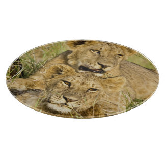 Grupo de cachorros de león, Panthera leo, Masai Tablas De Cortar