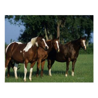Grupo de colocación de los caballos de la pintura postal