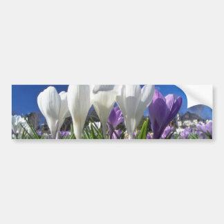 Grupo de flores de las azafranes pegatina de parachoque