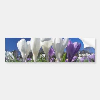 Grupo de flores de las azafranes etiqueta de parachoque