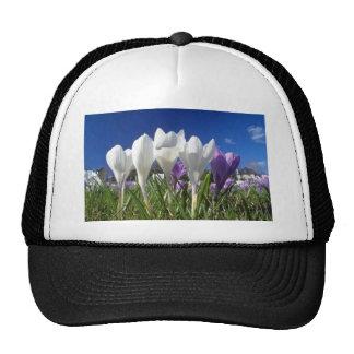 Grupo de flores de las azafranes gorras de camionero