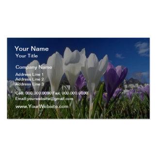 Grupo de flores de las azafranes tarjetas de visita