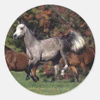 Grupo de funcionamiento árabe de los caballos etiquetas redondas