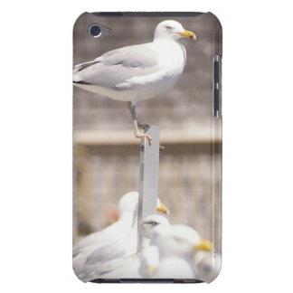 grupo de gaviotas de arenques (argentatus del Laru iPod Case-Mate Protector