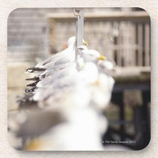 grupo de gaviotas de arenques (argentatus del posavaso