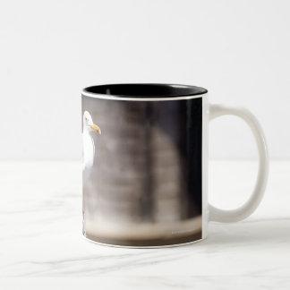 grupo de gaviotas de arenques (argentatus del taza de dos tonos