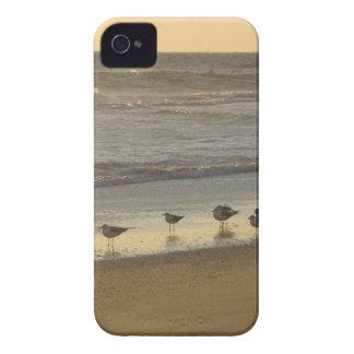 Grupo de golondrinas de mar carcasa para iPhone 4 de Case-Mate