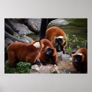 grupo de lemur superado rojo que mira el centro póster