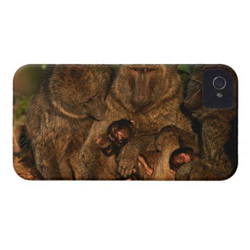 Grupo de observación verde oliva de los babuinos ( iPhone 4 fundas