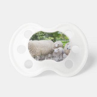 Grupo de ovejas blancas y de cordero en el camino chupete