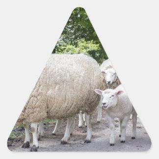 Grupo de ovejas blancas y de cordero en el camino pegatina triangular