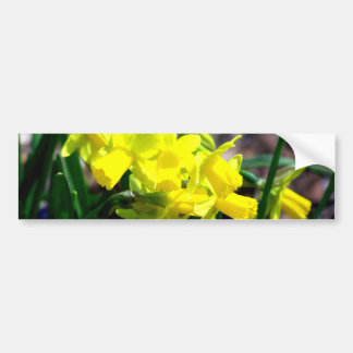 Grupo de pequeños narcisos amarillos pegatina de parachoque