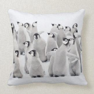 Grupo de pingüinos de emperador (forsteri del Apte Almohadas