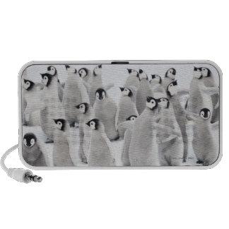 Grupo de pingüinos de emperador (forsteri del Apte iPod Altavoz