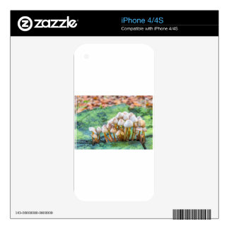 Grupo de setas en tocón de árbol verde skins para eliPhone 4