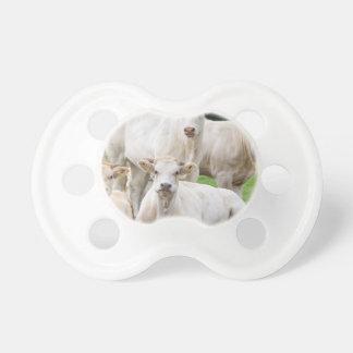 Grupo de vacas beige blancas que presentan en chupetes para bebes