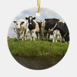 Grupo de vacas frisias adorno para reyes
