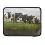 Grupo de vacas frisias fundas para macbook pro