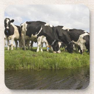 Grupo de vacas frisias posavaso