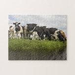 Grupo de vacas frisias rompecabezas