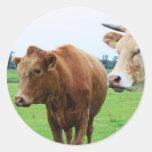 Grupo de vacas pegatina redonda
