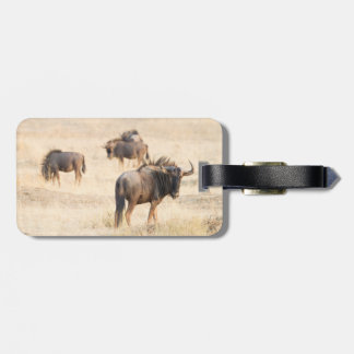 Grupo de wildebeest etiquetas para maletas