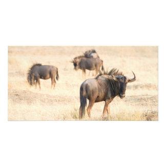 Grupo de wildebeest tarjeta personal con foto