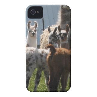 ¡Grupo del bebé de la llama, tan lindo! iPhone 4 Case-Mate Funda