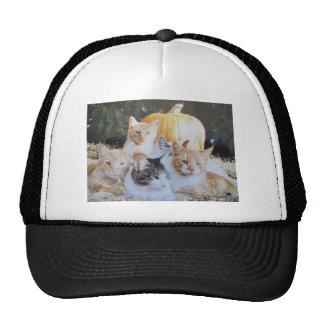 Grupo del gato de la calabaza gorras de camionero