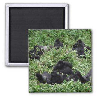 Grupo del gorila de montaña imán cuadrado