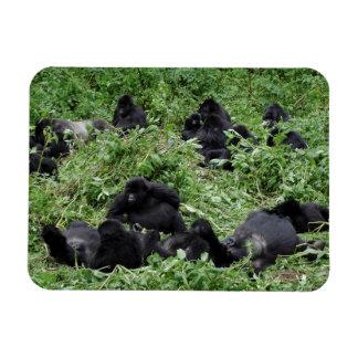 Grupo del gorila de montaña iman flexible