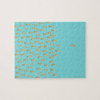 Grupo grande de goldfish que hace frente a un puzzle