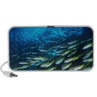 Grupo grande de natación de los pescados de los mo notebook altavoz