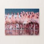 Grupo grande de pocos flamencos puzzles con fotos