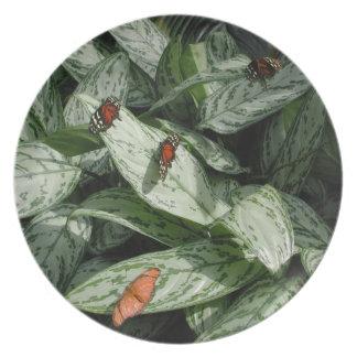 Grupo, rojos y naranja de la mariposa en la placa  plato