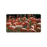 ¡Grupo rosado del flamenco, porciones de imagen de Etiquetas De Dirección