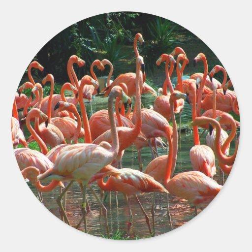 ¡Grupo rosado del flamenco, porciones de imagen de Pegatina Redonda