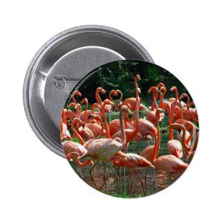 ¡Grupo rosado del flamenco, porciones de imagen de Pin Redondo De 2 Pulgadas
