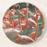 ¡Grupo rosado del flamenco, porciones de imagen de Posavasos Diseño