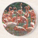 ¡Grupo rosado del flamenco, porciones de imagen de Posavaso Para Bebida