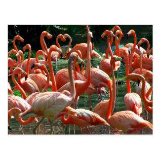 ¡Grupo rosado del flamenco, porciones de imagen de Postales