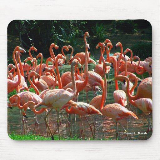 ¡Grupo rosado del flamenco, porciones de imagen de Tapete De Ratón