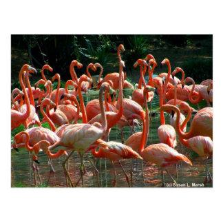 ¡Grupo rosado del flamenco, porciones de imagen de Tarjeta Postal