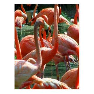 ¡Grupo rosado del flamenco, porciones de imagen de Tarjetas Postales